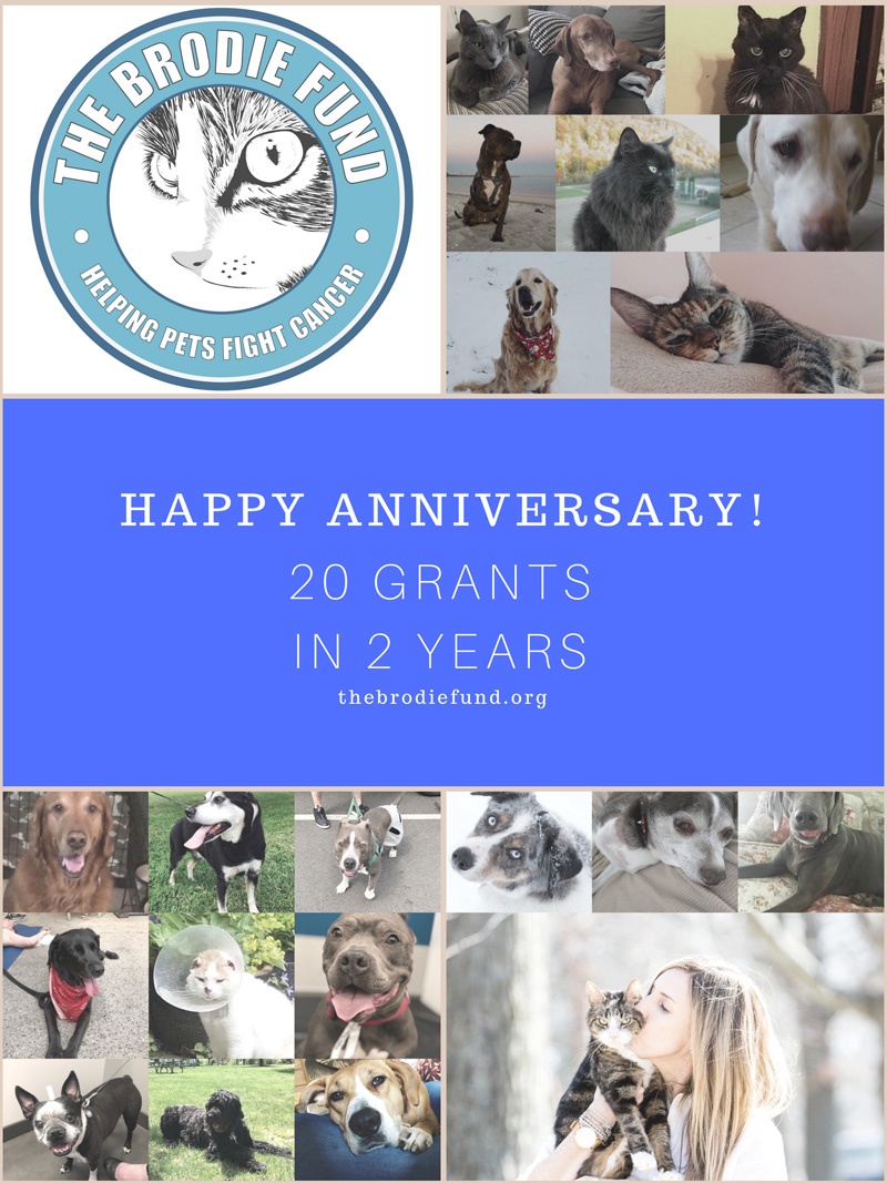 Happy Anniversary 20 Grants In 2 Years The Brodie Fund